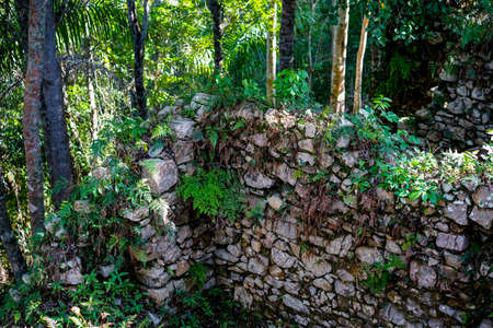 slave: stone wall covered with plants in a tropical forest. Ruins of slave houses on Cuba Stock Photo