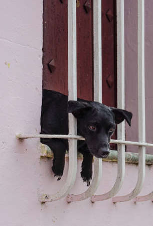 window bars: Small black puppy hanging out of the window bars