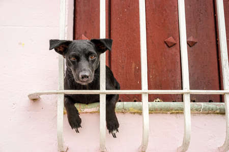 window bars: Small black puppy hanging looking out of the window bars