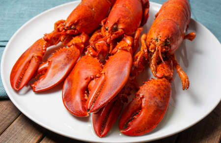 clawed: Cooked red Lobsters served on white plate ready for eating