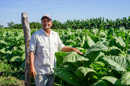 explains: Santiago de Cuba, Cuba - January 12, 2016: typical scene in the Cuban countryside. Cuban tobacco grower explains how he grows and harvest his tobacco fields