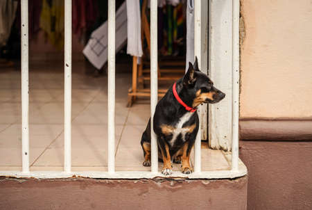 window bars: Small black puppy looking out of the window bars Stock Photo