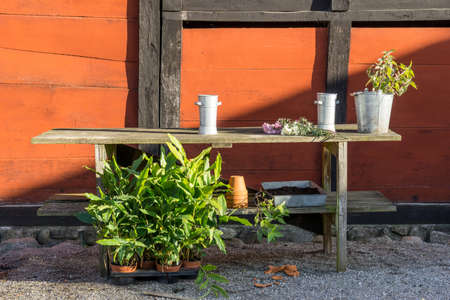 romantic idyllic plant table in the garden with old retro flower pot pots, garden tools and plants. Rustic table with flower pots, potting soil, trowel and plants