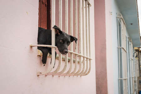 animal cruelty: Little black puppy sitting in the window and looking through window bars out on the street Stock Photo