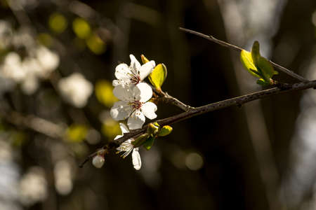 Der Frühling Bringt Die Zweige Der Bäume Zum Blühen. Kleine ...
