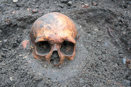 Archaeological excavation with old antique skull still half buried in the ground. Banque d'images