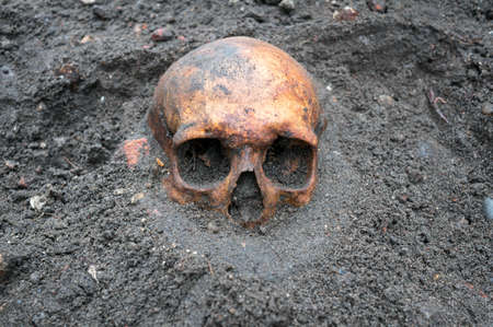 Archaeological excavation with old antique skull still half buried in the ground. Stock Photo