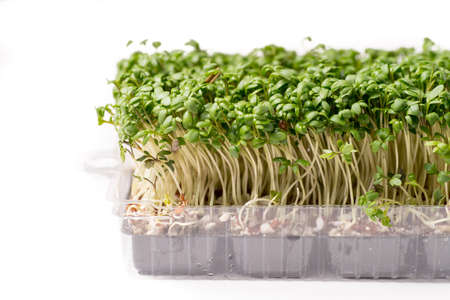 organic vibrant green cress isolated on white background