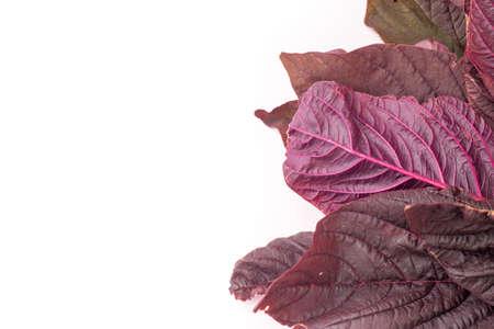 Organic Red amaranth salad leaves, isolated on white background 免版税图像