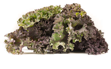 Organic red green kale, isolated on white background