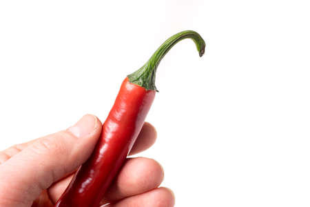 causasian hand holding chili pepper isolated on white background