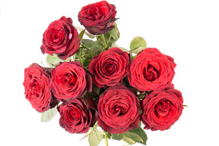 Bunch of beautiful dark red roses isolated on white background