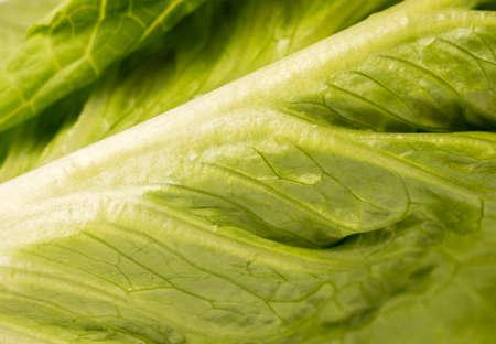 Close up of organic green leaf lettuce