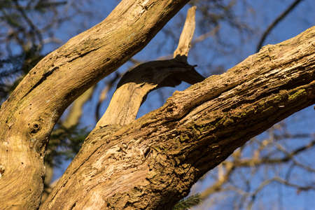 close up of old branches on tree, with blurred background and blue sky
