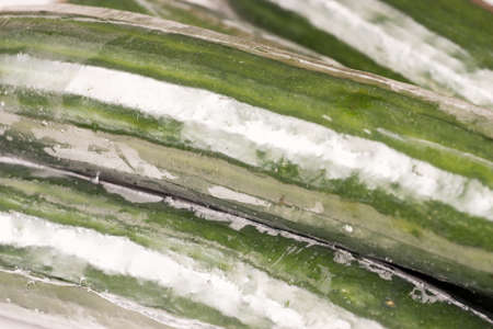 Bunch of cucumber wrapped in plastic films, close up and background