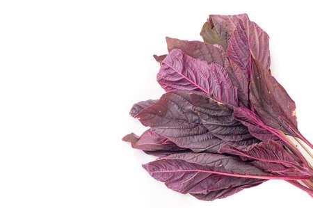 Organic Red amaranth salad leaves, isolated on white background Standard-Bild