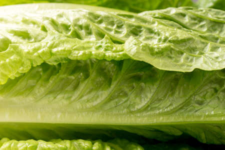 leaf of lettuce close up and background Standard-Bild
