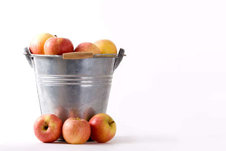 Apples in and around a zinc bucket. Stock Photo