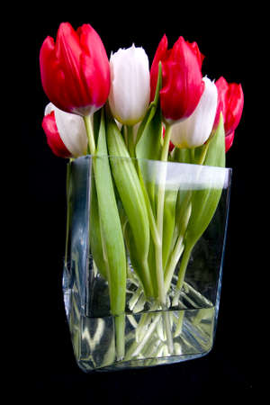 small tulips in vase Stock Photo