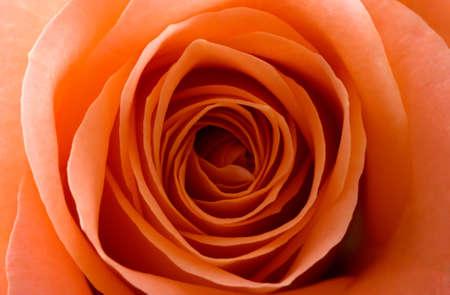 saumon rose Banque d'images