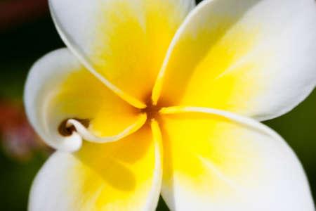 fleurs tropicales Banque d'images