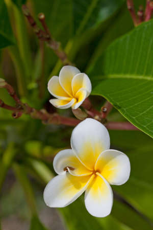 Tropical Lei Flowers photo