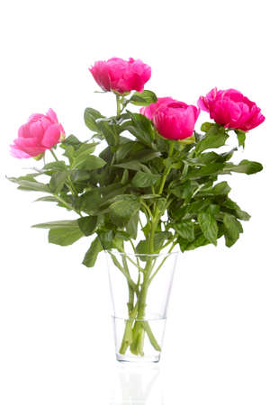 Bouquet of peony roses in a glass vase  Isolated on White