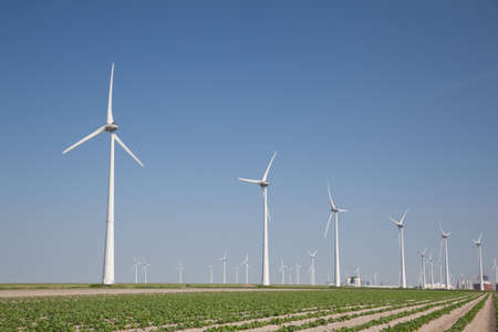 Windfarm with fresh crops and a clear blue sky