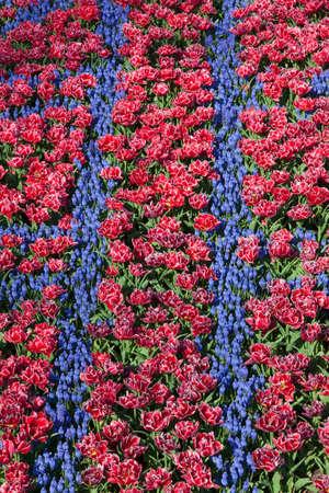 Arrangement de tulipes et jacinthe de raisin