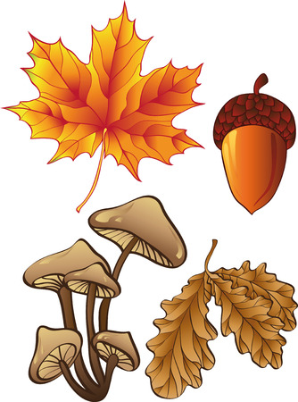 edible mushroom: set of autumn plants