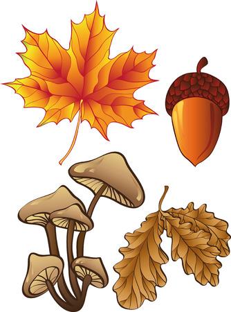 edible mushroom: set of autumn plants