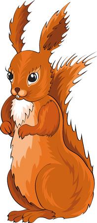 squirrel Stock Vector - 7908833