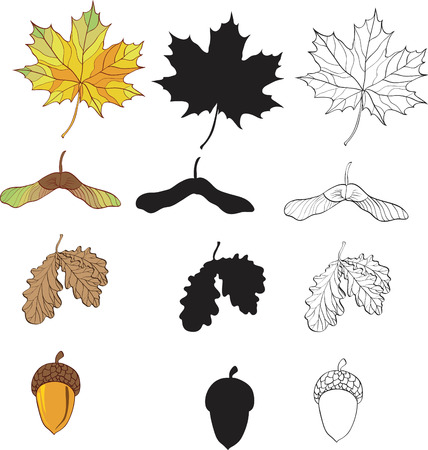 a set of maple and oak leaves Illustration