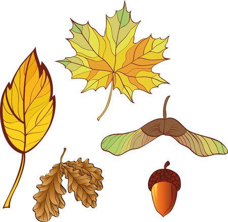 a set of autumn leaves. No gradient.