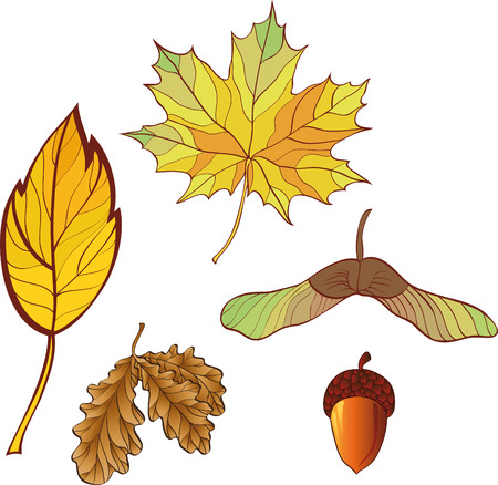 a set of autumn leaves. No gradient. Stock Vector - 7908903