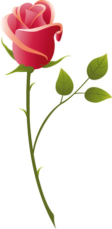 rosebud:   illustration red rose on a white background.