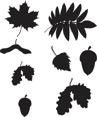 rowan tree: set of different nature elements isolated on with background Illustration