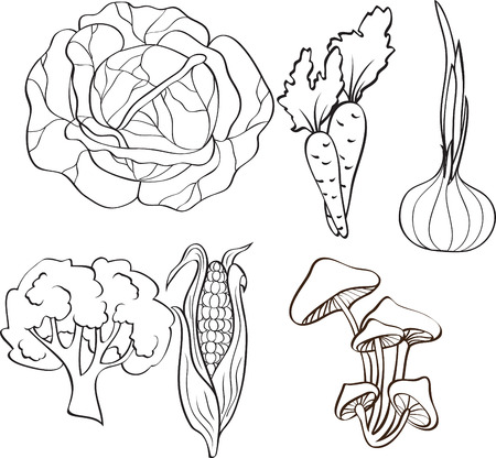 edible mushroom: set of vegetables Illustration