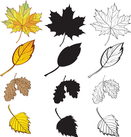 a set of maple and birch leaves