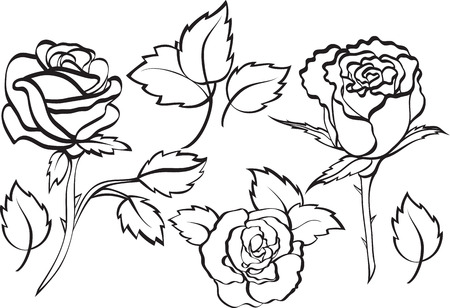 set of roses Illustration