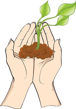 plant in hands Vector