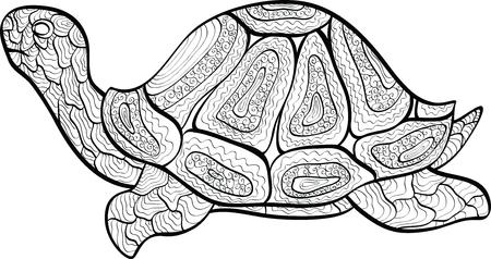 herbivorous animals: turtle