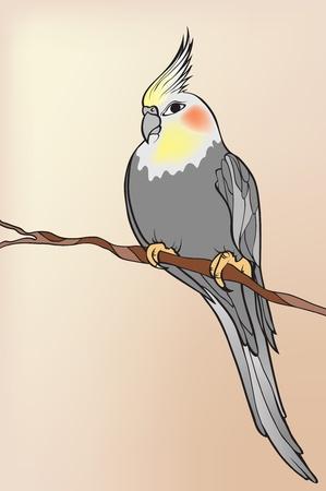 parrot Stock Vector - 9231535