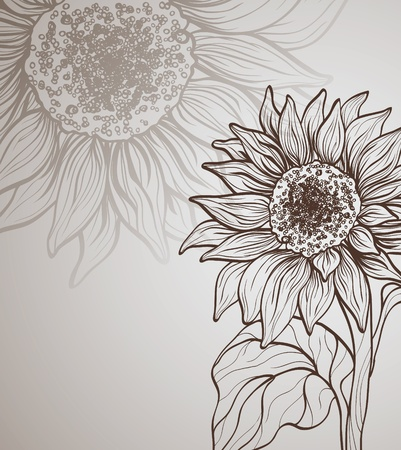 outline drawing: background with sunflower
