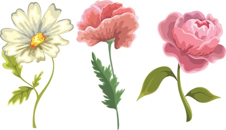 flowers isolated on white background Illustration
