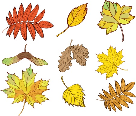 set of leaves isolated on white background Vector
