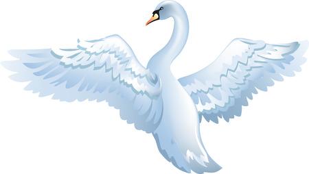 白い背景に分離されたエレガントな白鳥  イラスト・ベクター素材