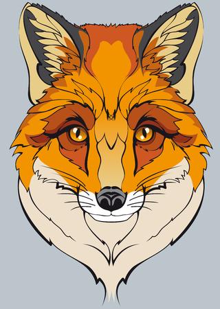 foxy: one orange wild fox Illustration