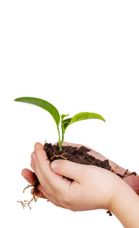 Child s hands holding green plant in soil isolated on white