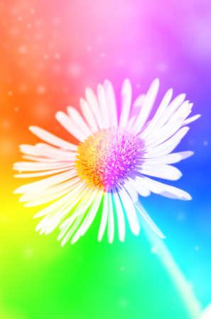 Single daisy rainbow colored flower with bokeh photo